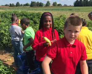 Milton Hershey School fourth-grade students visited one of the farms on campus to pick and taste peppers as part of an experiential learning exercise.