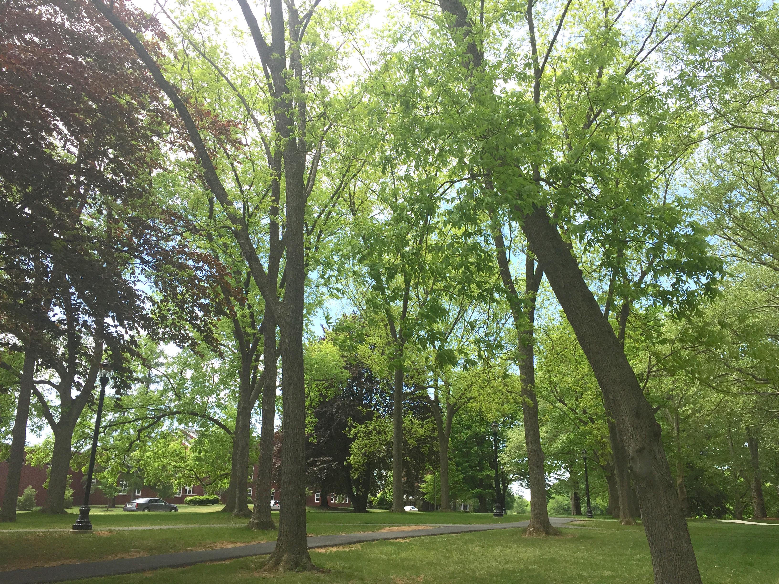 Trees at MHS