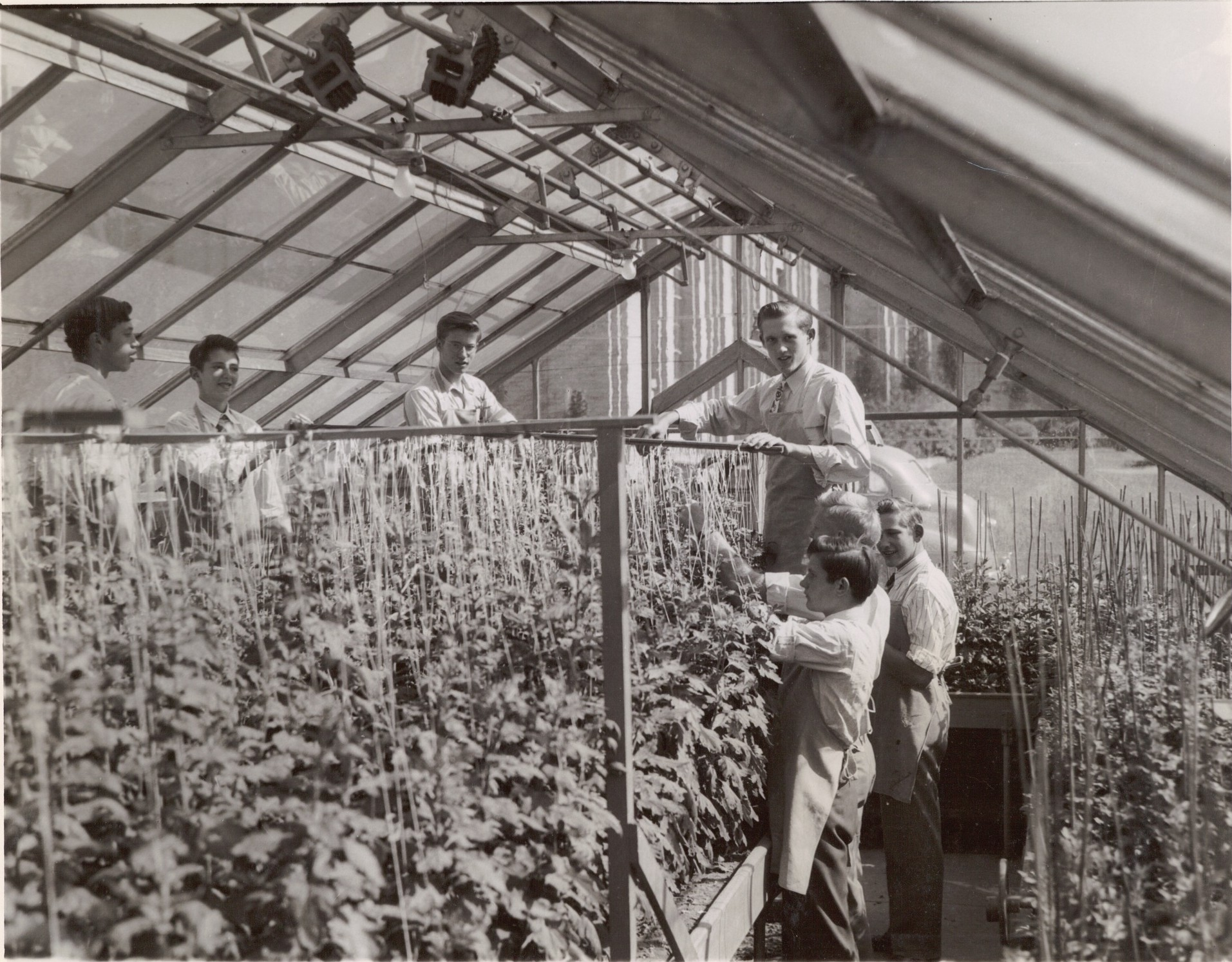 The greenhouse at Senior Hall in 1949