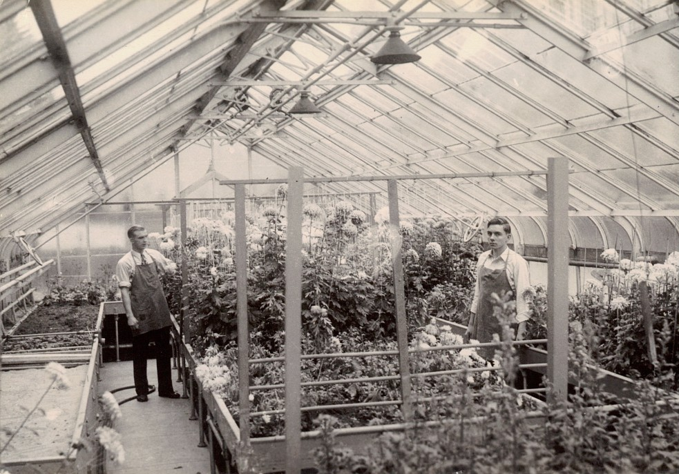 The Senior Hall greenhouse in 1949