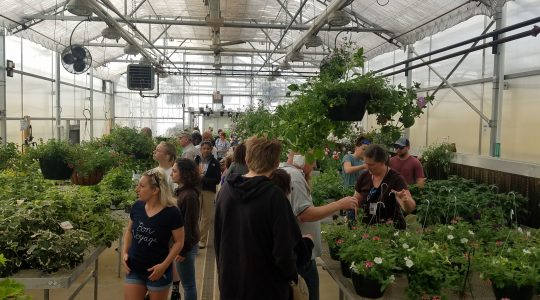 Visitors browse plants on sale during the first-ever agriculture festival at MHS.
