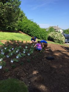 MHS students planting herbs.