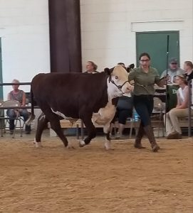 MHS student Amelia Usner showing at the Lebanon Area Fair.