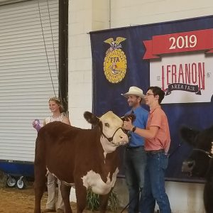 MHS student Kenny Casey with his winning heifer at the Lebanon Area Fair.
