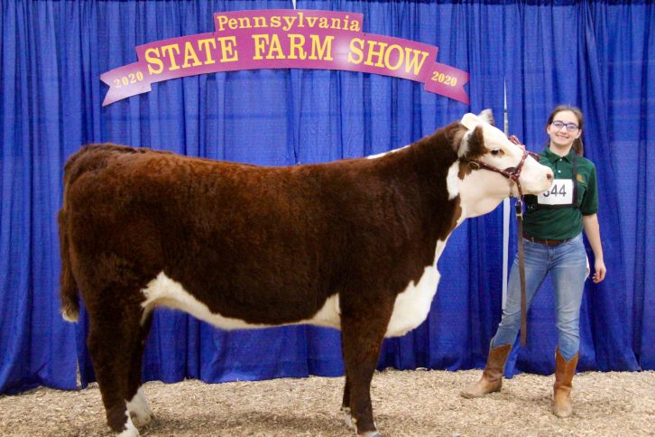 A Milton Hershey School student stands with her competition cow at the Pennsylvania Farm Show.