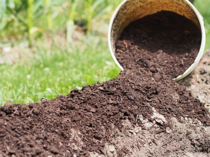 Compost's dark color comes from decomposed organic matter (called humus) which feeds plants and retains moisture.