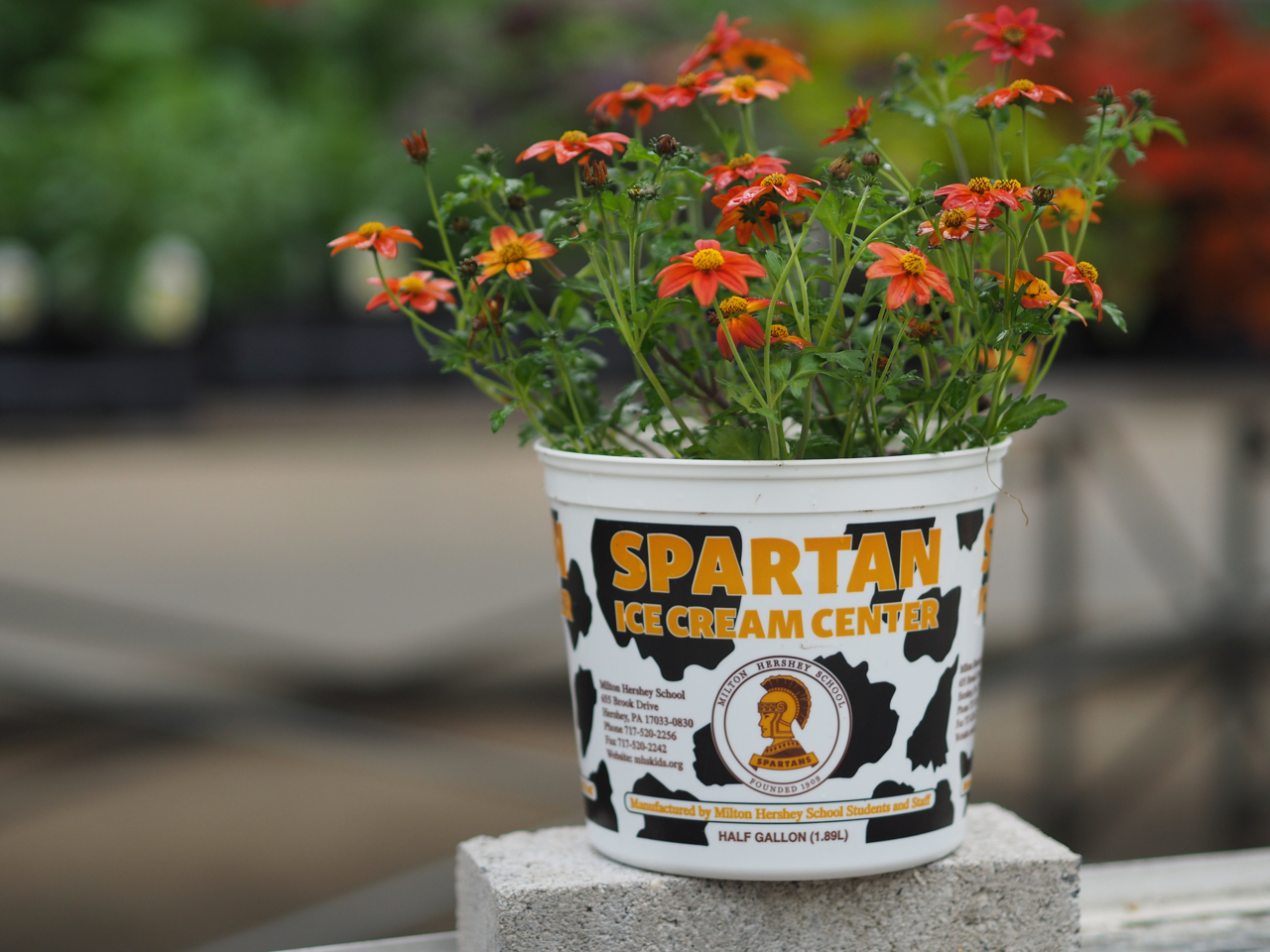 Life hack: Spartan Ice Cream containers can be modified into flower pots with the addition of a few drainage holes.
